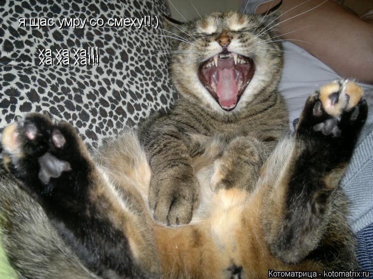 Котоматрица: я щас умру со смеху!!:) я щас умру со смеху!!:) ха ха ха!!! ха ха ха!!! ха ха ха!!!