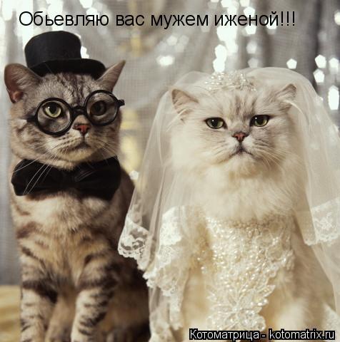 Котоматрица: Обьевляю вас мужем иженой!!!