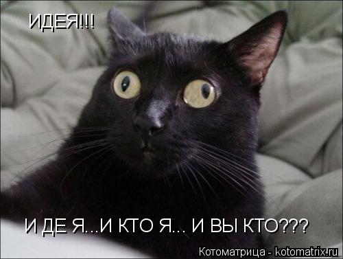 Котоматрица: ИДЕЯ!!! И ДЕ Я...И КТО Я... И ВЫ КТО???