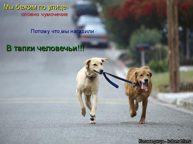Котоматрица: Мы бежим по улице- словно чумочечие Потому что,мы нагадили В тапки человечьи!!!