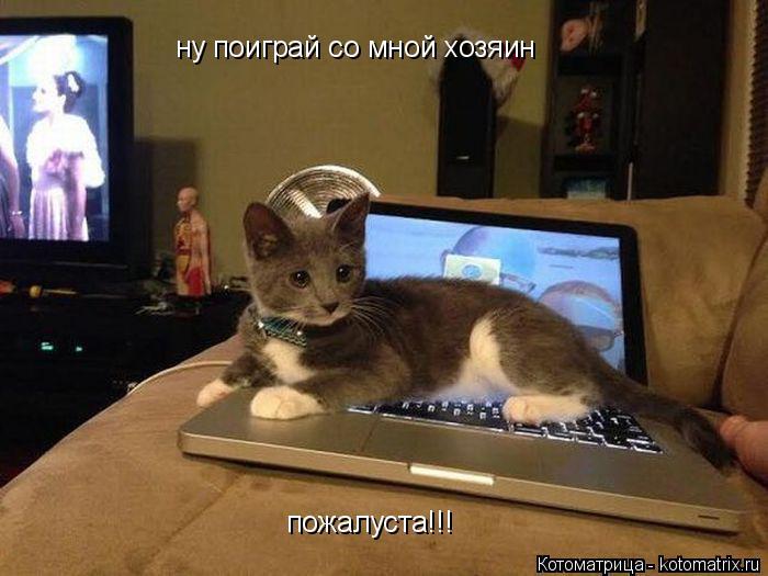 Котоматрица: ну поиграй со мной хозяин пожалуста!!!