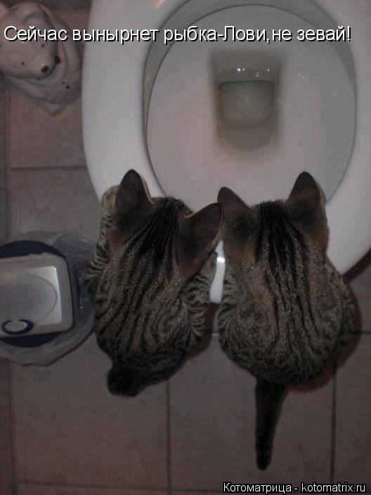Котоматрица: Cейчас вынырнет рыбка-Лови,не зевай!