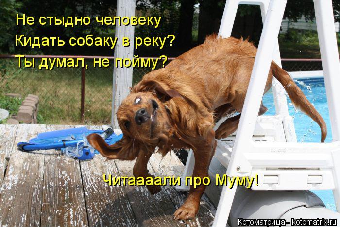 Котоматрица: Не стыдно человеку Кидать собаку в реку? Ты думал, не пойму? Читаааали про Муму!