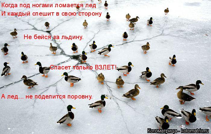 Котоматрица: Когда под ногами ломается лед И каждый спешит в свою сторону Не бейся за льдину. Спасет только ВЗЛЕТ! А лед... не поделится поровну.