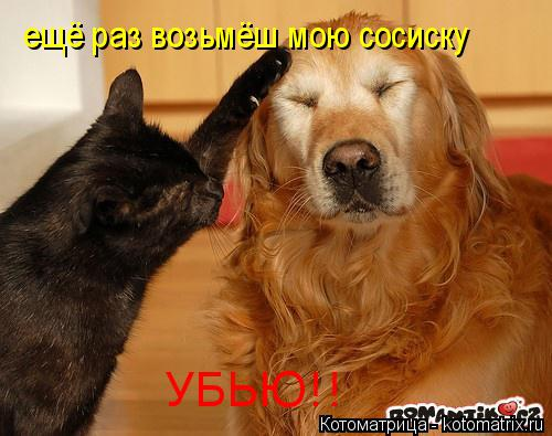 Котоматрица: ещё раз возьмёш мою сосиску УБЬЮ!!