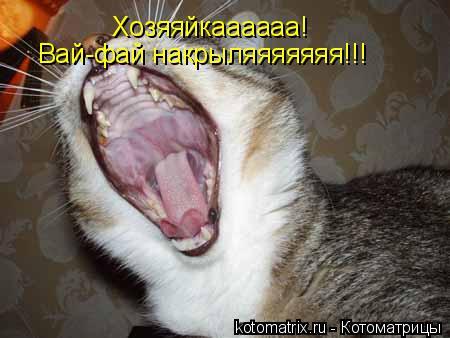 Котоматрица: Хозяяйкаааааа! Вай-фай накрыляяяяяяя!!!