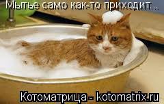 Котоматрица: Мытье само как-то приходит...