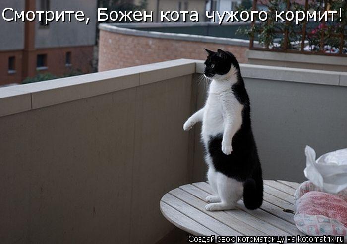 Котоматрица: Cмотрите, Божен кота чужого кормит! Cмотрите, Божен кота чужого кормит!