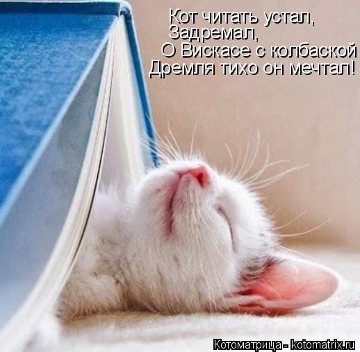 Котоматрица: Кот читать устал, Задремал, О Вискасе с колбаской  Дремля тихо он мечтал!