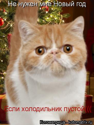 Котоматрица: Не нужен мне Новый год Если холодильник пустой(((