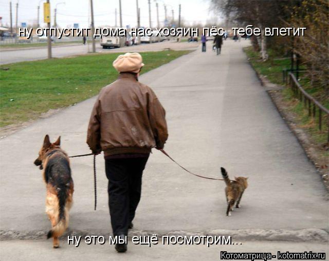 Котоматрица: ну отпустит дома нас хозяин пёс, тебе влетит ну это мы ещё посмотрим...