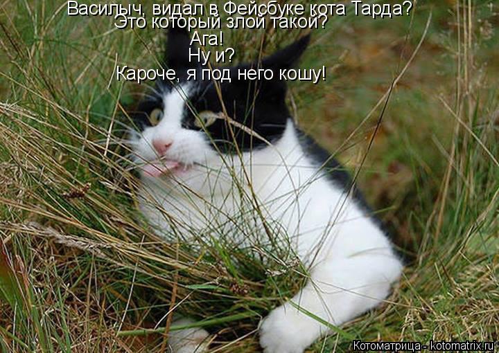 Котоматрица: Василыч, видал в Фейсбуке кота Тарда? Это который злой такой? Ага! Ну и? Кароче, я под него кошу!