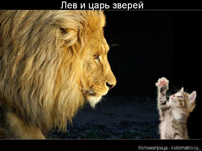 Котоматрица: Лев и царь зверей