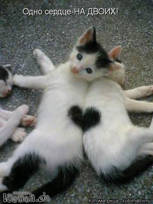 Котоматрица: Одно сердце-НА ДВОИХ!
