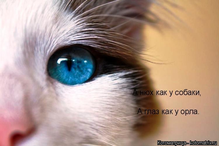 Котоматрица: А нюх как у собаки, А глаз как у орла.