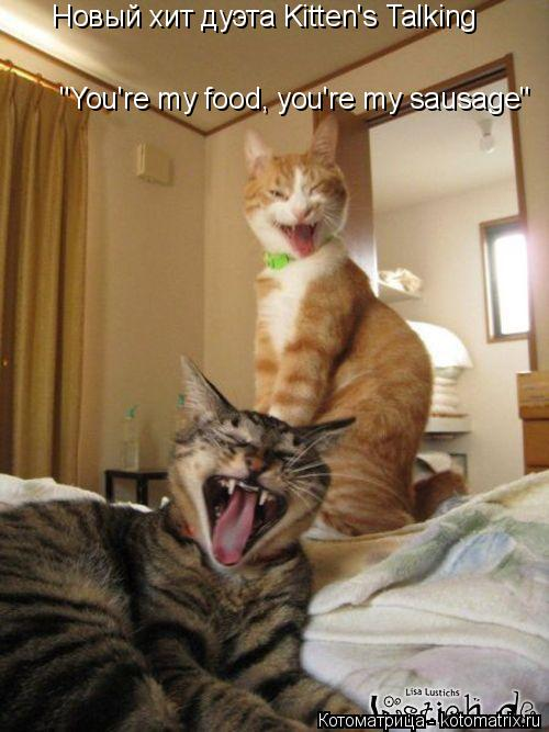 "Котоматрица: Новый хит дуэта Kitten's Talking ""You're my food, you're my sausage"""