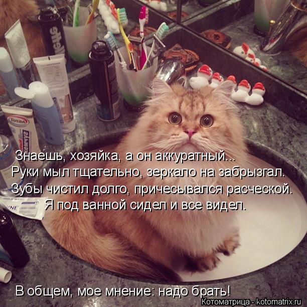 Котоматрица: Знаешь, хозяйка, а он аккуратный... Руки мыл тщательно, зеркало на забрызгал. Зубы чистил долго, причесывался расческой. Я под ванной сидел и