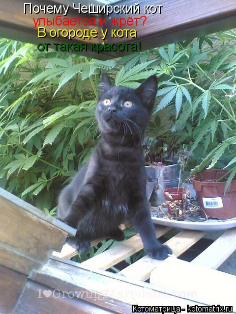 Котоматрица: Почему Чеширский кот улыбается и жрёт? В огороде у кота от такая красота!
