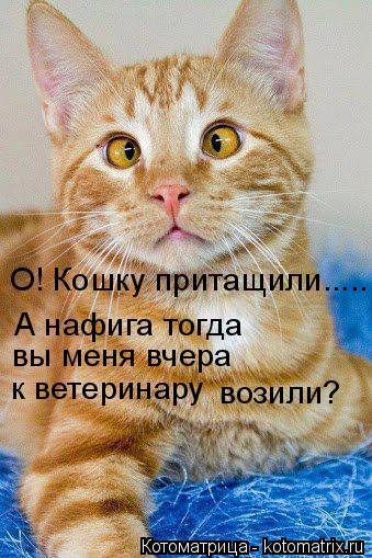 Котоматрица: О! Кошку притащили..... А нафига тогда вы меня вчера к ветеринару возили?