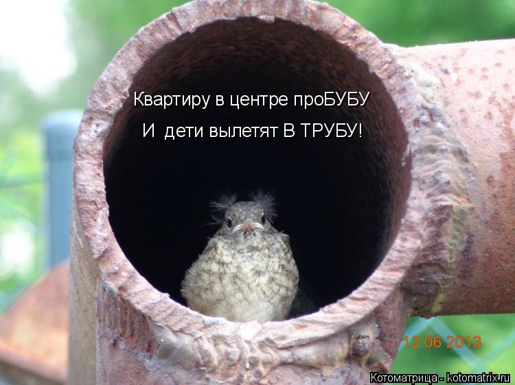Котоматрица: Квартиру в центре проБУБУ И  дети вылетят В ТРУБУ!