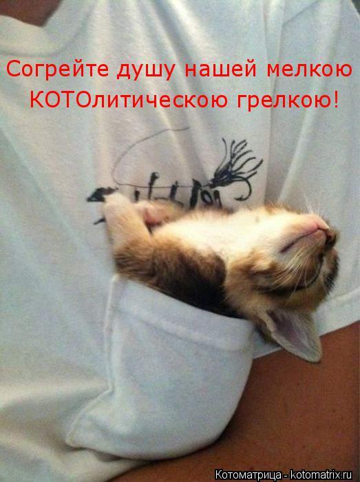 Котоматрица: Согрейте душу нашей мелкою КОТОлитическою грелкою!