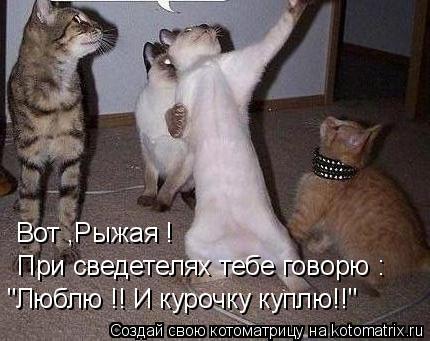 """Котоматрица: Вот ,Рыжая ! При сведетелях тебе говорю : """"Люблю !! И курочку куплю!!"""""""