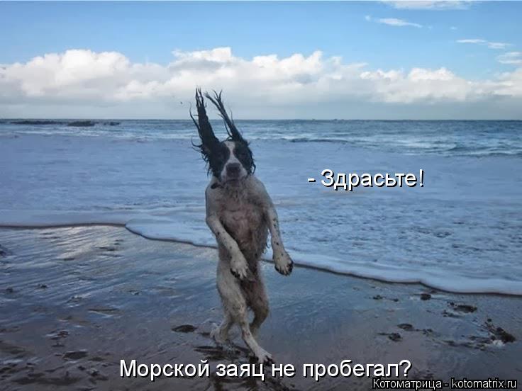 Котоматрица: - Здрасьте! Морской заяц не пробегал?