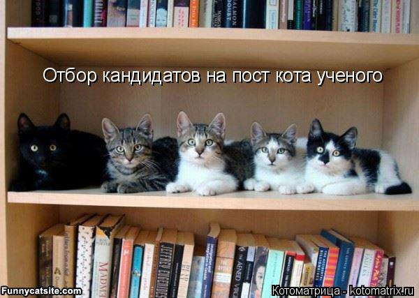 Котоматрица: Отбор кандидатов на пост кота ученого