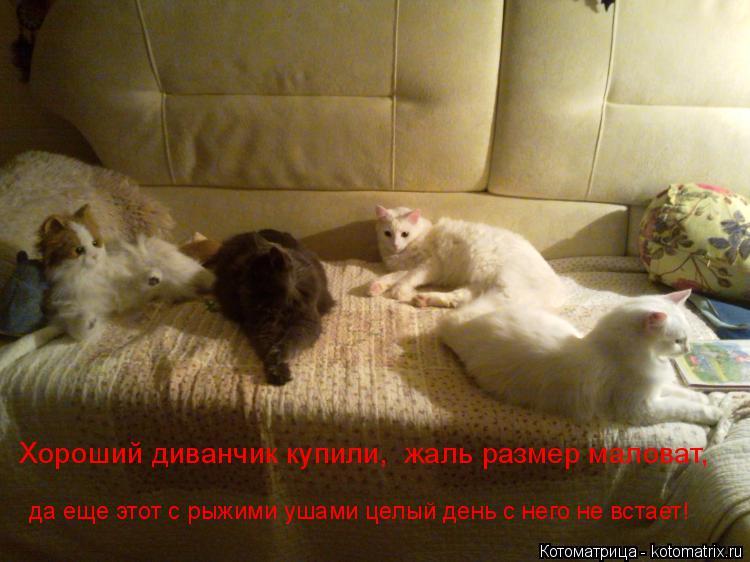 Котоматрица: Хороший диванчик купили,  жаль размер маловат,  да еще этот с рыжими ушами целый день с него не встает!