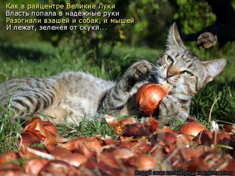 Котоматрица: Как в райцентре Великие Луки Разогнали взашей и собак, и мышей Власть попала в надёжные руки И лежат, зеленея от скуки...