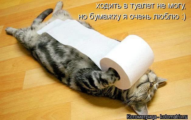 Котоматрица: ходить в туалет не могу, но бумажку я очень люблю :)