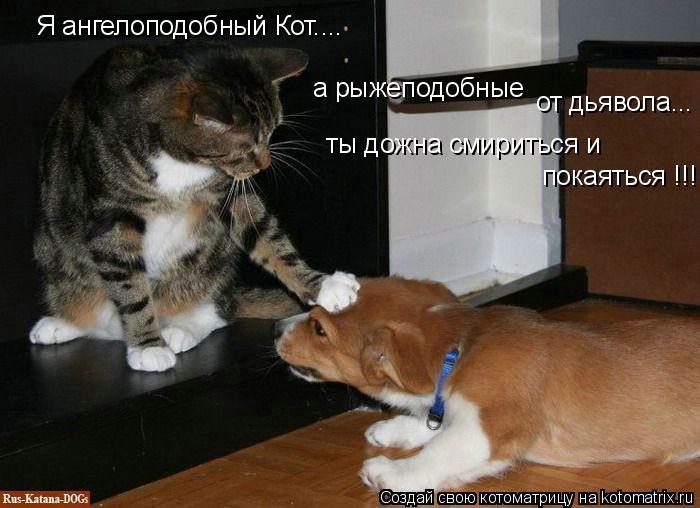 Котоматрица: Я ангелоподобный Кот.... а рыжеподобные от дьявола... ты дожна смириться и  покаяться !!!