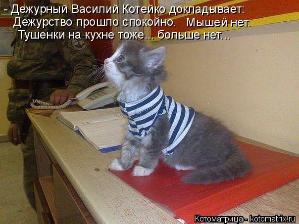 Котоматрица: - Дежурный Василий Котейко докладывает:  Дежурство прошло спокойно.  Мышей нет.  Тушенки на кухне тоже... больше нет...