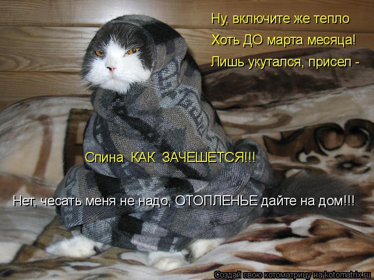 Котоматрица: Ну, включите же тепло Хоть ДО марта месяца! Лишь укутался, присел - Спина  КАК  ЗАЧЕШЕТСЯ!!! Нет, чесать меня не надо, ОТОПЛЕНЬЕ дайте на дом!!!