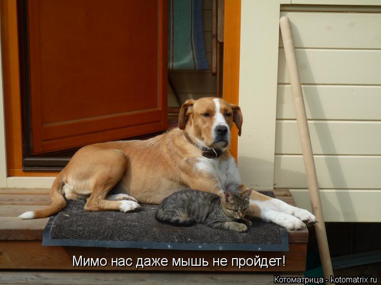 Котоматрица: Мимо нас даже мышь не пройдет!