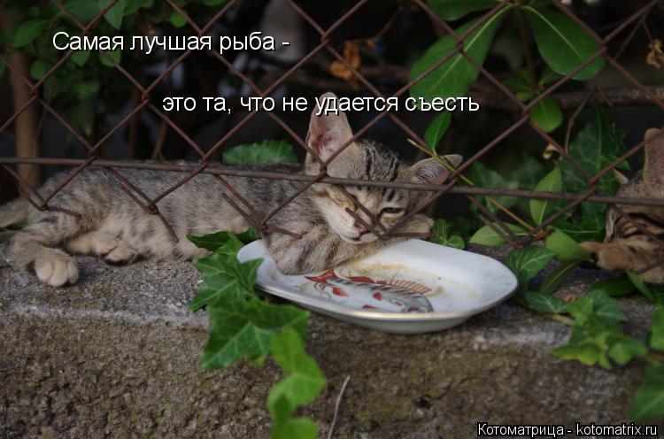 Котоматрица: Самая лучшая рыба - это та, что не удается съесть