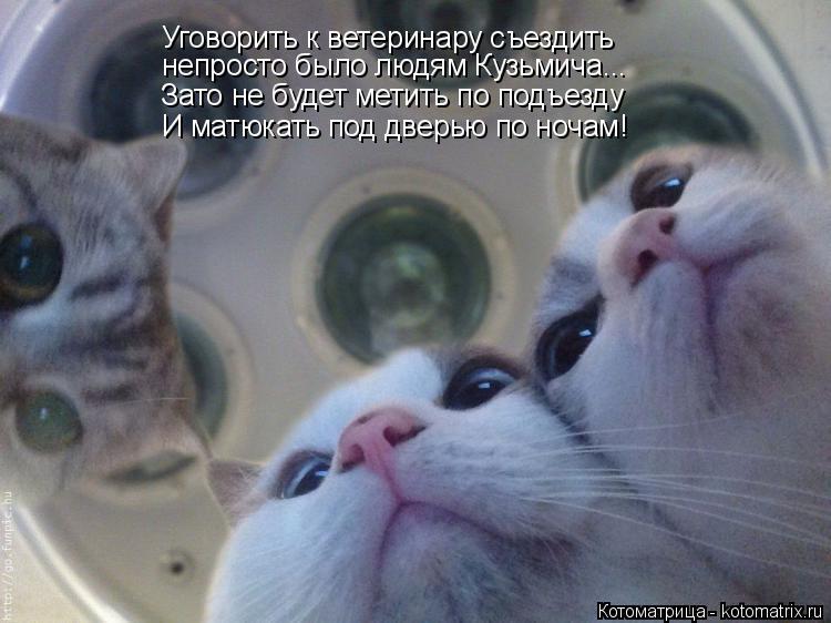 Котоматрица: Уговорить к ветеринару съездить непросто было людям Кузьмича... Зато не будет метить по подъезду И матюкать под дверью по ночам!