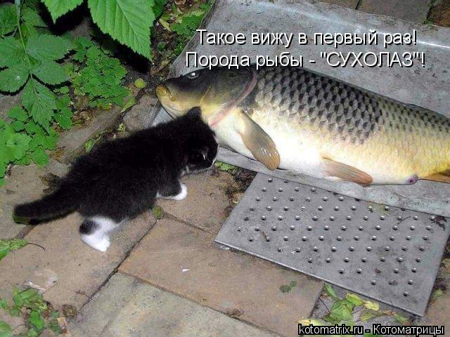 """Котоматрица: Такое вижу в первый раз! Порода рыбы - """"СУХОЛАЗ""""!"""
