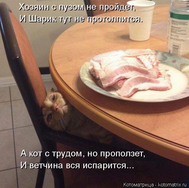Котоматрица: Хозяин с пузом не пройдет, И Шарик тут не протолпится. А кот с трудом, но проползет, И ветчина вся испарится...
