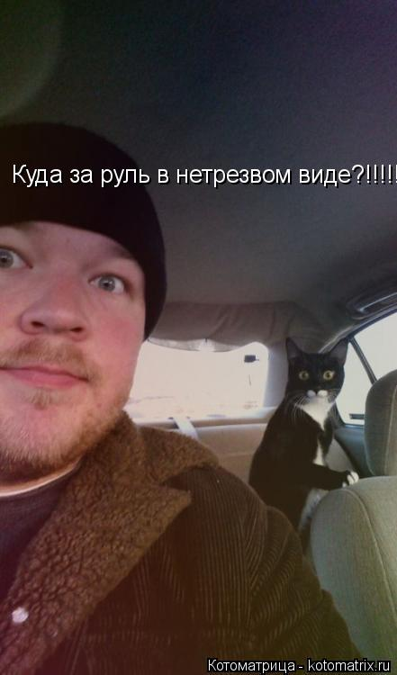 Котоматрица: Куда за руль в нетрезвом виде?!!!!!!!