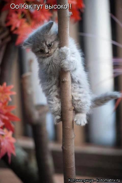Котоматрица: Оо!Как тут высоко!! И вижу я соседку!!   И вижу я соседку!!