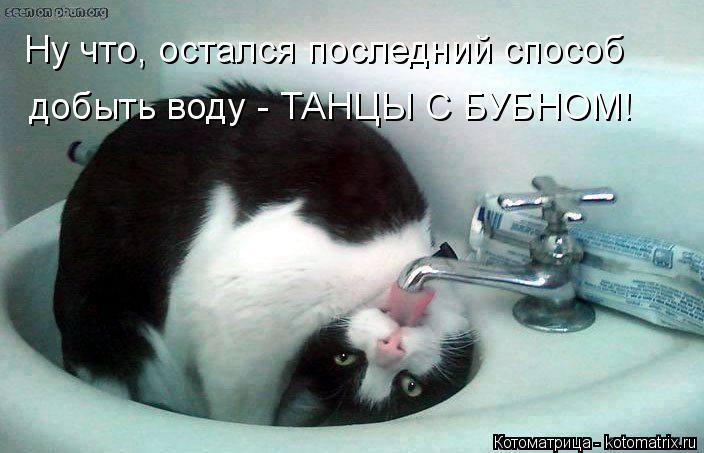 Котоматрица: Ну что, остался последний способ   добыть воду - ТАНЦЫ С БУБНОМ!