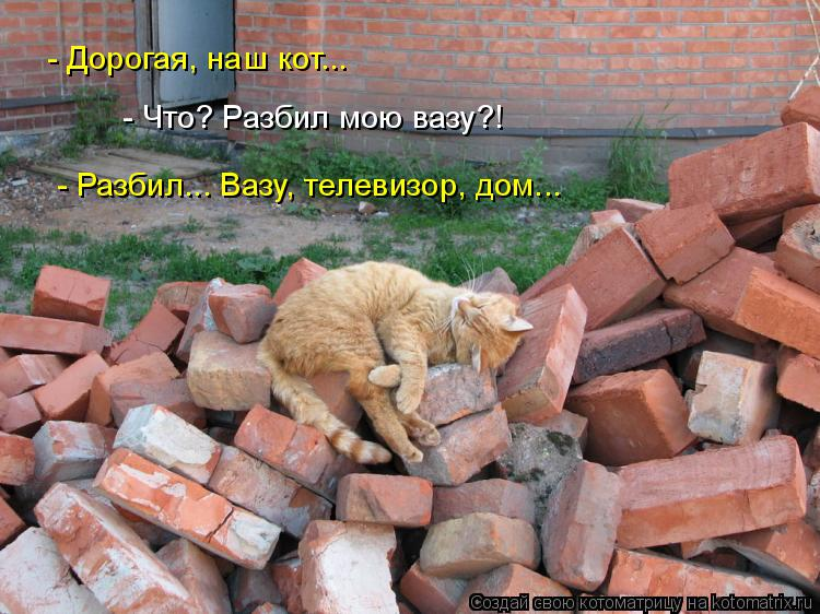 Котоматрица: - Дорогая, наш кот... - Что? Разбил мою вазу?! - Разбил... Вазу, телевизор, дом...