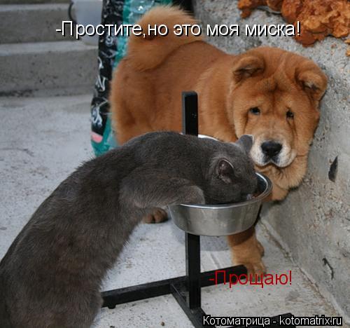 Котоматрица: -Простите,но это моя миска! -Прощаю!