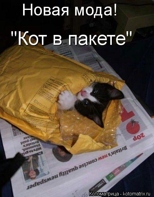 """Котоматрица: Новая мода! """"Кот в пакете"""" """"Кот в пакете"""""""