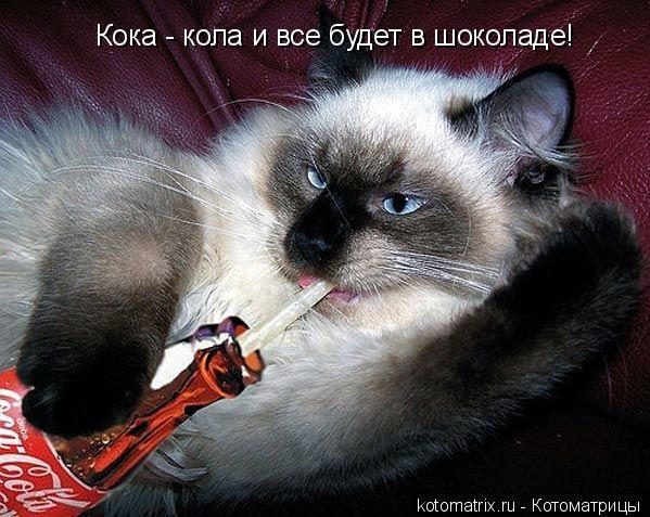Котоматрица: Кока - кола и все будет в шоколаде!