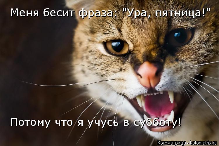 """Котоматрица: Меня бесит фраза: """"Ура, пятница!"""" Потому что я учусь в субботу!"""