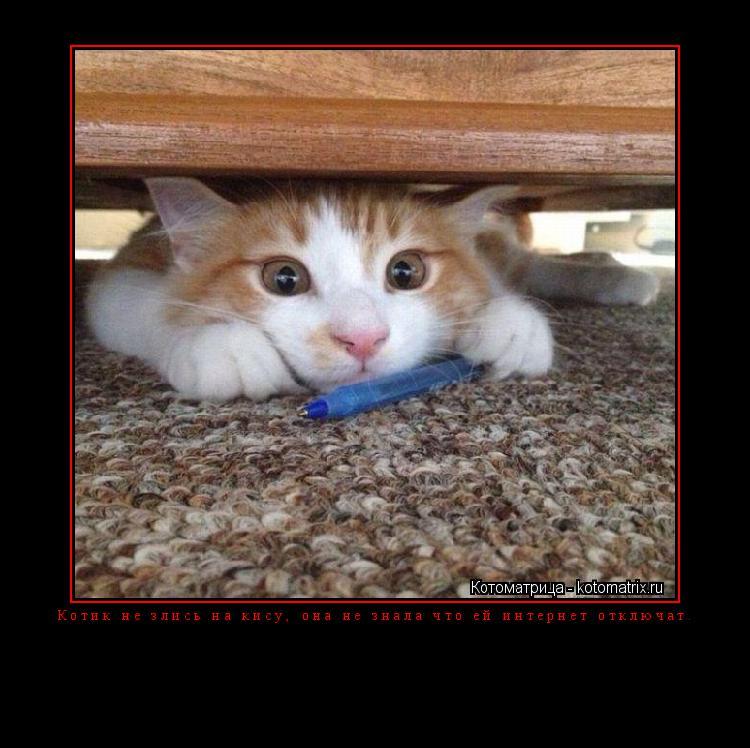 Котоматрица: Котик не злись на кису, она не знала что ей интернет отключат.