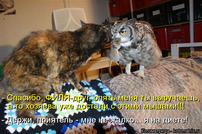 Котоматрица: - Спасибо, ФИЛЯ-друг, опять меня ты выручаешь,  а то хозяева уже достали с этими мышами!!! - Держи, приятель - мне не жалко... я на диете! - Держи, пр