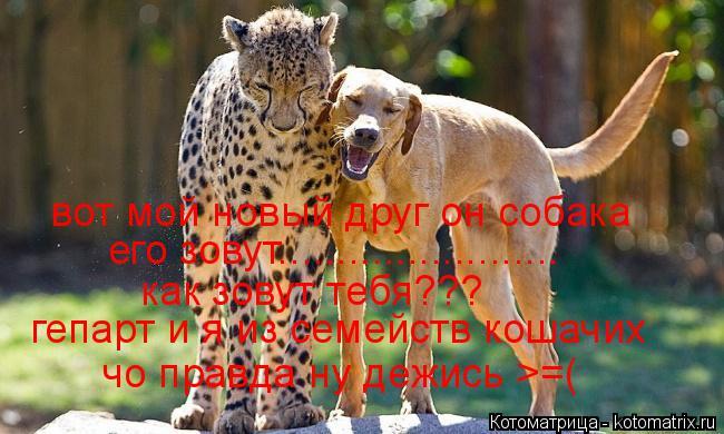 Котоматрица: вот мой новый друг он собака его зовут........................ как зовут тебя??? гепарт и я из семейств кошачих чо правда ну дежись >=(
